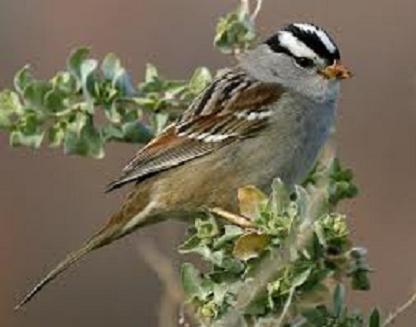 Nonconformist- Sparrow