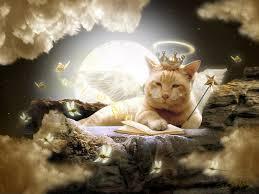 Cat- Heaven